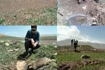 نجات یک قلاده گورکن نادر در لرستان از داخل چاه
