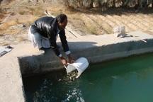 افزون بر3 هزار بچه ماهی سردآبی در استخر نیمروز رهاسازی شد