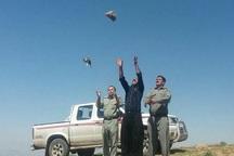 14 بال کبک در شاهیندژ رهاسازی شد