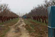 خشکسالی 285 میلیارد ریال به کشاورزی کیار خسارت زد