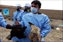 شناسایی نخستین کانون آنفلوانزای فوق حاد پرندگان در یاسوج