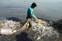 یکهزار و ۵۰۰ نفر در صنعت پرورش آبزیان استان اردبیل مشغول به کار هستند