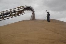 140 میلیارد ریال به گندم کاران اردبیل پرداخت شد