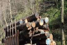 برداشت چوب از جنگل های گلستان کاهش یافت