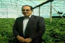 66 هکتاراز اراضی کشاورزی شهرستان فردیس به سیستم آبیاری نوین مجهزشد