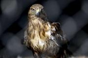 تشدید نظارت محیطزیست خراسان شمالی بر تخلفات صید پرندگان