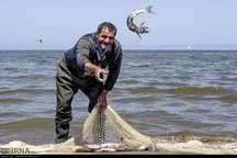 83 درصد افزایش صید ماهیان استخوانی در گیلان