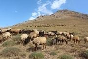 تولید فرآورده های لبنی استان اردبیل از یک میلیون فراتر رفت