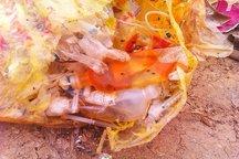 بیمارستان های آذربایجان غربی مجهز به دستگاه های بی خطر سازی زباله هستند