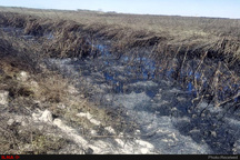 ضرورت هدایت سیلاب به بخش ایرانی هورالعظیم شرکت نفت: مشکلی ایجاد نکردهایم  راه حل کنترل سیلاب در بازگشایی مسیر طبیعی رودخانه نیسان است