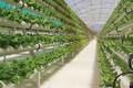 افزایش کشت گلخانه ای به 50 هزار هکتار نیازمند تجهیزات است