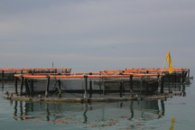 ماهی در قفس مسیر توسعه آبزی پروری گلستان است