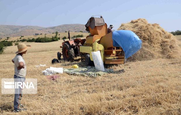 خرید ۲۹۲ هزار تن گندم از کشاورزان لرستانی