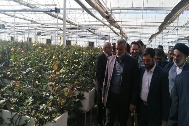 وزیر جهاد کشاورزی از گلخانه گل رز در بیرجند بازدید کرد