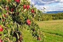 واگذاری زمین به فارغ التحصیلان رشته کشاورزی در بانه