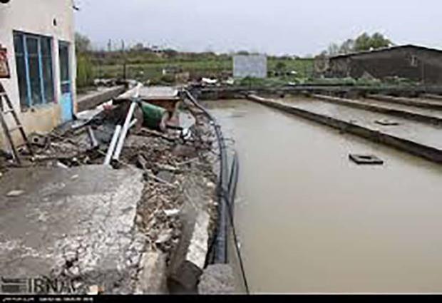 سیلاب 30 میلیارد ریال به مزارع پرورش ماهی در بروجرد خسارت زد