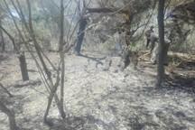 پارک ملی کرخه در شوش آتش گرفت