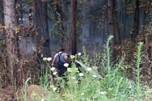 آتش سوزی جنگل های شهر صنعتی رشت مهار شد