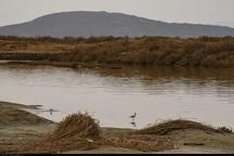 تالاب گاوخونی حدود 300 میلیون مترمکعب آب نیاز دارد