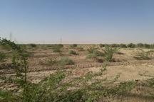 عملیات بوته کاری در 135 هکتار از مراتع ملارد در حال انجام است