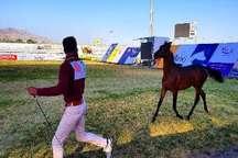 جشنواره زیبایی اسب اصیل عرب و کرد در کرمانشاه آغاز شد