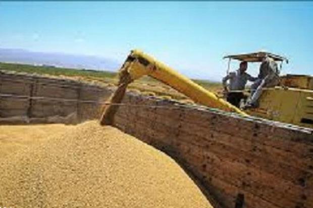 خمین با کمبود انبار ذخیره گندم مواجه است
