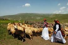 آذربایجان غربی صنایع تبدیلی برای تولیدات دامی عشایر ندارد