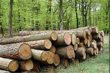 کشف 800 میلیون ریالی چوب قاچاق در قائمشهر