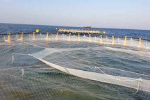 طرح پرورش ماهی در قفس دیلم بهرهبرداری شد