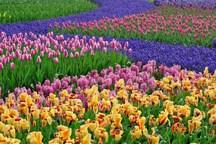 10 میلیارد ریال برای احداث باغ گلها در همدان اختصاص یافت