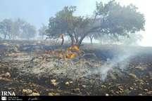 مهار آتش سوزی در 70 درصد جنگل های ارتفاعات کوهستانی اندیمشک