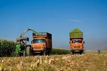توجه به  کشاورزی درآمد خانوارهای اردبیلی را افزایش می دهد