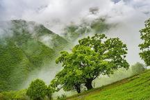 بارندگی در پیرانشهر 1.3 برابر سال گذشته شد