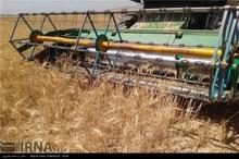 تولید غلات در قزوین افزایش پیدا کرد