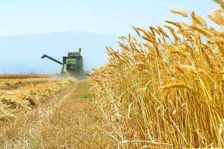 خرید 2 میلیون و 400 هزار تن گندم طی 2 ماه نخست فصل برداشت گندم در کشور