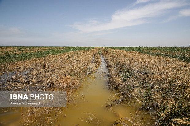 پرداخت ۴۷ میلیارد تسهیلات خسارت سیل به کشاورزان خراسان جنوبی