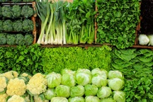 258 هزار تُن سبزی و صیفی در آذربایجان غربی برداشت می شود