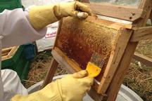 تولید عسل در زنجان پنج درصد رشد یافت