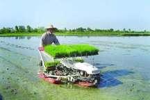 کشت مکانیزه برنج در یک هزار و 650 هکتار از شالیزارهای آستارا