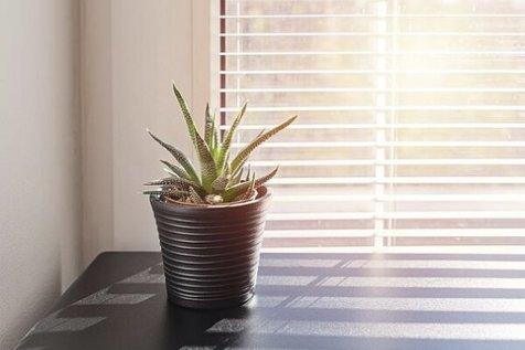 این گلدان هوشمند از ساکنان خانه مراقبت می کند
