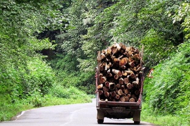 محموله 6 تنی چوب قاچاق در اشنویه توقیف شد