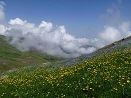 کاهش پوشش گیاهی مراتع ییلاقی استان اردبیل
