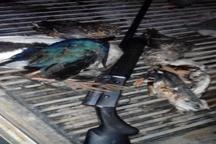 دستگیری متخلف شکار غیرمجاز پرندگان در شوشتر