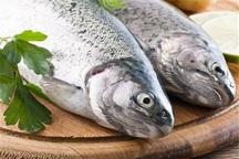 ذائقه؛ دلیل پایین بودن سرانه مصرف ماهی در ایران است