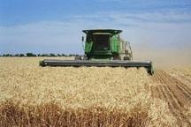 29 هزار تن گندم در شهرستان مرند برداشت می شود
