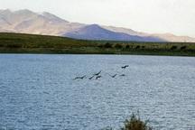 آب سد مهاباد به احیای تالاب «قوپی باباعلی» اختصاص یافت