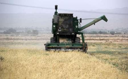 تولید گندم در استان بوشهر 64درصد کاهش یافت
