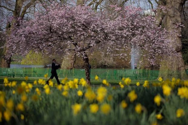 عکس/ بهار در لندن