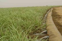 372 میلیارد ریال اعتبار در بخش آب و خاک کشاورزی قم طی دولت یازدهم هزینه شد