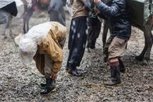 خبر کشته شدن اسب های کوله بران در اشنویه کذب است
